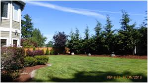 backyards splendid backyard trees for privacy trees for privacy