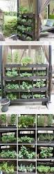 plant stand herb garden stand plant impressive photos