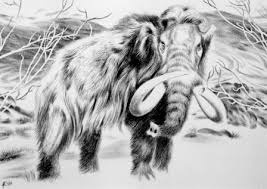 mammoth fragments siberia raise cloning hopes update