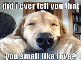 Exhausted Meme - 20 i like you memes that will make her blush sayingimages com