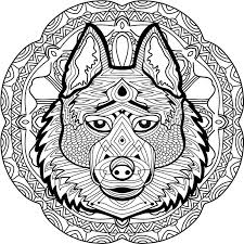 coloring page for adults stern husky on a background stock vector