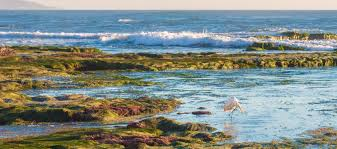 Tide Table San Diego Top 8 Places To Go Tide Pooling In San Diego La Jolla Mom