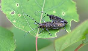 Bean Leaves Bed Bugs How To Tell What U0027s Eating Your Garden Plants Mnn Mother Nature