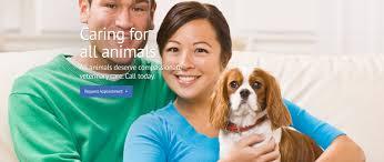 south bay veterinary care veterinarian in gardena ca usa home