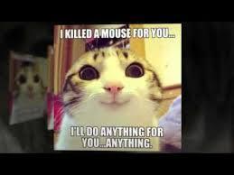 Funny Cat And Dog Memes - funny cat and dog memes youtube