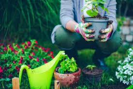 eco garden how to garden organic