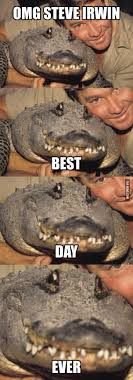Alligator Memes - omg steve irwin steve irwin humour and hilarious