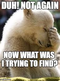 Now What Meme - facepalm bear meme imgflip
