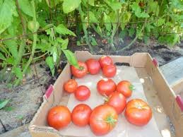 punch list harvesting vegetables fall flowers cicadas and other