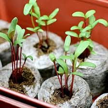 how to grow vegetables from seeds indoors