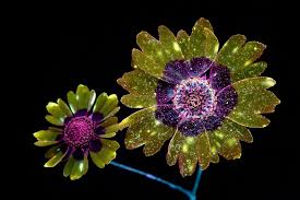 flower images pictures flowers glow under uv induced visible fluorescence