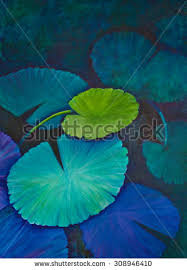 water lily pads aqua turquoise blue stock illustration 308946410