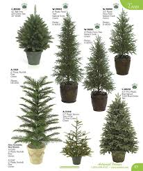 25 unique evergreen trees landscaping ideas on blue
