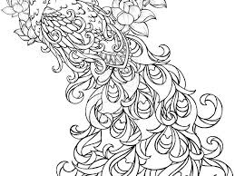peacock coloring page chuckbutt com