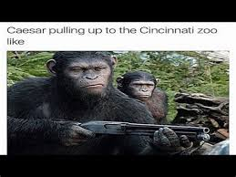 Ape Meme - th id oip wwoyxgqdxklwww1ksgql qhafj