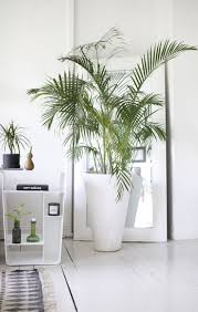 Modern Houseplants 30 best house plant images on pinterest elephant ears elephant