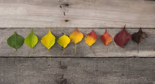 Yellow Red Color Blindness Colour Blindness What Leaf Colours Do You See Fussy