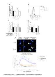 nox4 dependent hydrogen peroxide promotes shear stress induced