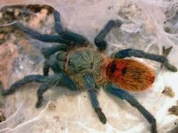 176 best spiders u0026 tarantulas images on pinterest spiders