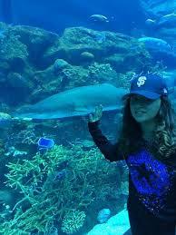 la bestia la e la bestia photo de dubai aquarium underwater zoo