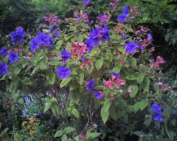 August Garden Questions