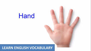 hand and arm human body parts learn english vocabulary youtube