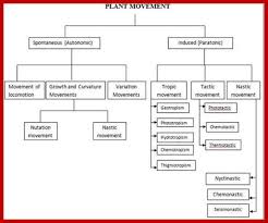 What Is Growth Movement Of A Plant Toward Light Called Physiology Of Plant Movements