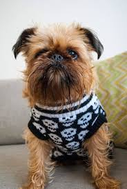 590 best pet apparell knit images on pinterest dog sweaters