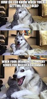 You Re Getting Old Meme - bad pun dog meme imgflip