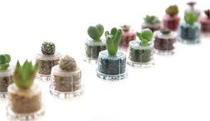 new style plant mini diy pet plant how ornament my