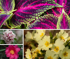 blooming plants learn about winter blooming plants at class on nov 5 the