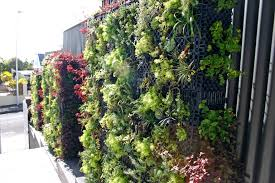 case study artificial vertical green walls for a restaurant in