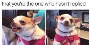 Dog Funny Meme - 12 funny dog memes 6 when the lego dog arrives