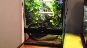green tree python cage set up care