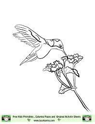 hummingbird line art free hummingbird coloring page lucy learns