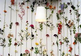 wall flowers wallflowers dearest nature
