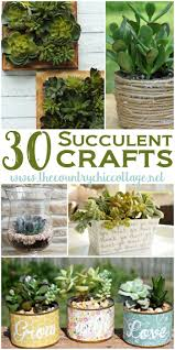 371 best succulents images on pinterest succulents garden