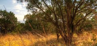 cedar brush management hill country alliance