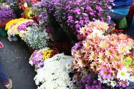 flowers for sale fresh flowers for sale at baguio market photo