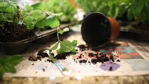 how to make easter crafts for kids with herbs planting a living