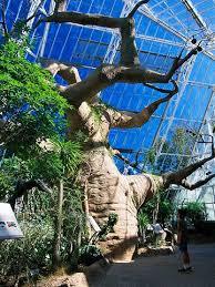 Ohio Botanical Gardens Explore Midwest Arboretums And Botanical Gardens Cleveland