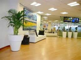 best plant for office best office plants plants for the office environment gardening how