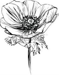 Flower Drawings Black And White - clip art of gladiolus flowers done in black and white line