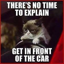 Grumpy Cat No Memes - animal capshunz no time to explain funny animal pictures with