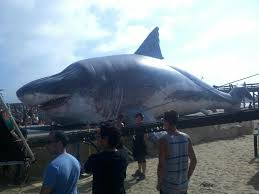 biggest megalodon shark bakersfield shines in shark week spotlight valley public radio