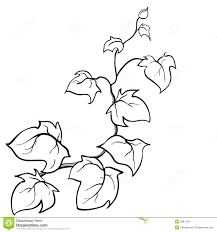 vector hand drawn sketch ivy stock illustration image 38871901