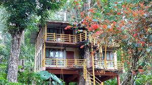 Best 10 Tree Houses in Kerala that provide a Charming Natural