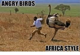 Africa Meme - angry birds africa style africa meme on me me
