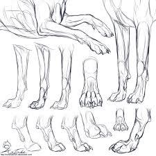wolf paw anatomy choice image learn human anatomy image