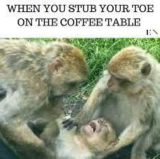 Funny Monkey Meme - 14 funny memes that will leave you on the floor laughing